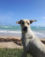 Dominican Republic, Diego amd errant dog that adopted me the first day I arrives in the village and stayed by my side the hole 4 months I was living there. He was my dody gard, what a great dog.