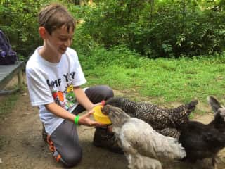 My son feeding the chickens! He is really great with animals and especially likes doggie kisses.