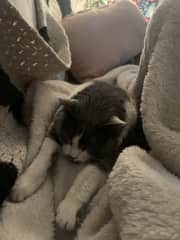 She loves to cozy up in blankets