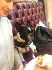 With Poppy - French bulldog rescued from Cyprus. I was her dog sitter for 3 months weekdays while her parents were at work. She has severe anxiety - ex puppy farm.