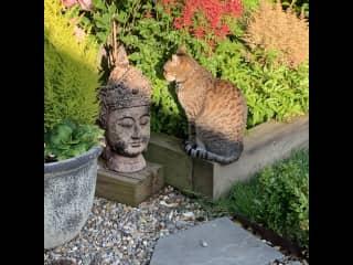 Misha having a chat with Buddha