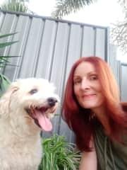 Baxter _Cockapoo dog _Pet/house sit Coombabah QLD 4216 April 2021