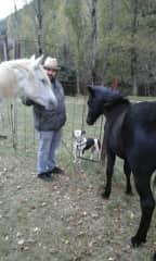 My dog Gaya two horses my grandmother was taking care of and me