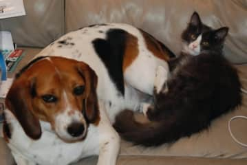 Daisy the beagle and Radar the cat.