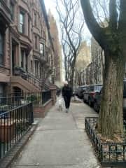Upper West Side walks with Georgie, December 2019