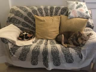 This is Alfie (dog) and Molly (cat) we looked after them in November 2019