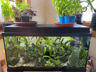 2 aquariums: 1 for neon and guppy fish and a little 35l for shrimps. Pond with koi and goldfish in the garden