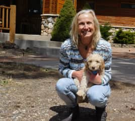 Caring for Dunco - an adorable Goldendoodle puppy