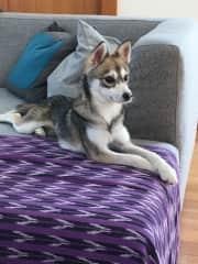 Puppy Eno