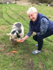 Reuniting with princess who I used to look after as a piglet. She remembered me!