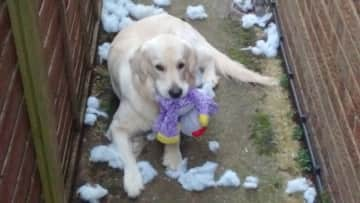 Toby - oops had a bit of an accident ....
