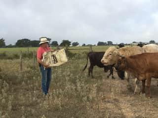 My husband feeding the cattle in Ledbetter TX