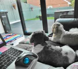 The 3 of us waiting for the rain to stop so we can play - Addlestone England