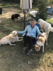 Emily housesitting five dogs in Tuscany