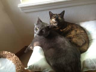 My sweet kitties