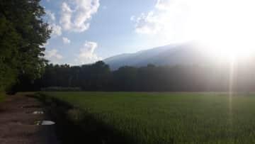 Local walk