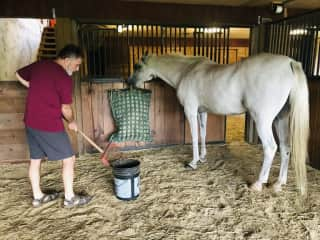Mucking stalls is one of my meditations! Here with Cal, my 23 yo Arabian gelding.