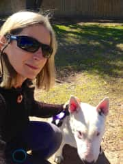 Out and about with Muzza, the British bull terrier.