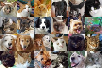 All of our pets - Australia and Europe 2019
