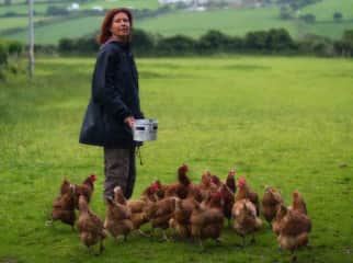 Willow, feeding a flock of rescued battery chickens, now free range, happy and healthy.