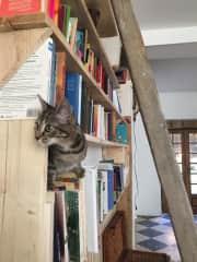 Tabs on the bookshelf!