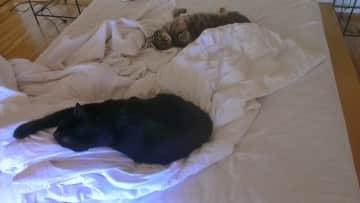 Luxuriating on my bed, Bambam and sis Emosh some years ago