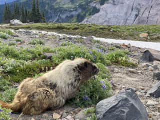 Made friends with a marmot on our trip.
