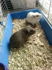 Gilbert & Henry ❤❤