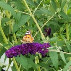 Botanizing, birding and wildlife watching are part of my professional intetests