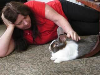 Housesitting house rabbit Cantaloupe