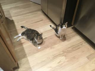 Carmel and Brinka waiting patiently for food