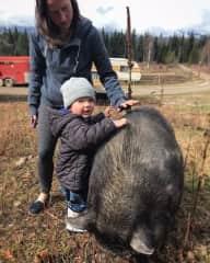 Merlin the Pig at Bear Corner Horse Ranch in Golden, B.C.