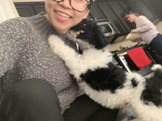 Parker, a St. Berdoodle puppy!