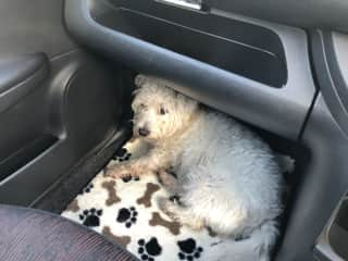 Ellie chilling in the car en route to the park