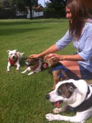 Afternoon pets in the park - watching 4 adorable senior dogs in Hawaii