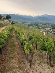 Vineyards near Vevey