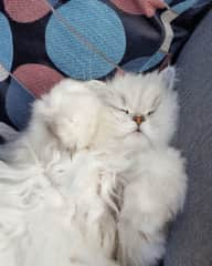 She's so cute when she's sleeping!