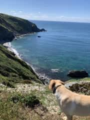 Beautiful walks; Beryl admiring the view
