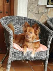 She is Puky. He is a lovely old dog. She is 14 years old. She is blind, but very affectionate especially with children