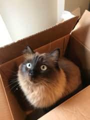I love boxes!
