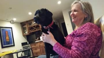 Diane with JoJo, a young lab from a housesit