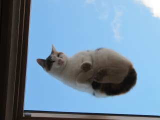 Flying on a Velux