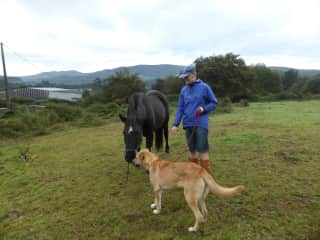 Michael introducing Lola the dog to the neighbour's horse, house sitting 2016