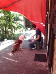 Petting Iggy and Pop