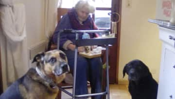 Woody and Belle welcomed mum and me to my first ever Trusted Housesitters sit in Beaumont-du-Perigord Jan 2019. We have returned and resat several times since.