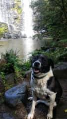 Lacey on the Kerikeri River walk