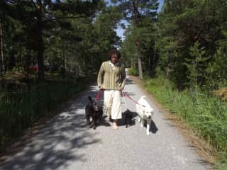 Walking the pack in Sweden..