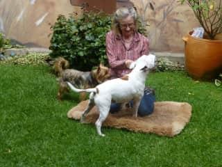 Gizmo & Moose with Carole.