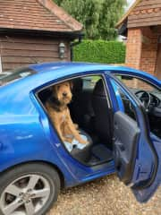 Archie waiting for a ride