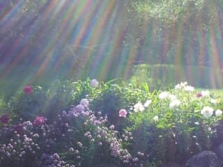 tended garden